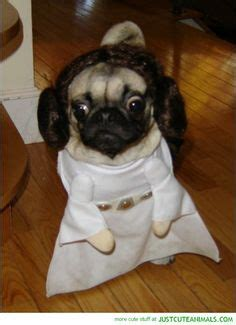 darth vader pug costume pugs bullies more oh my on pugs wars costumes and bulldogs