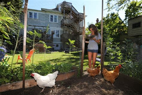 colwood council votes to allow backyard chickens