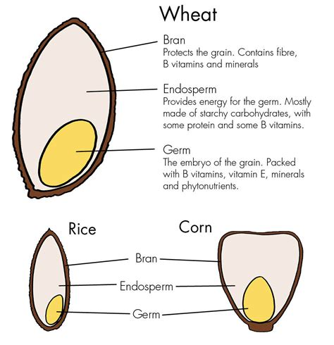 whole grains vs gluten whole grains haleo