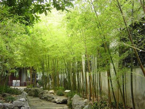 bamboo nice japanese garden ideas pinterest