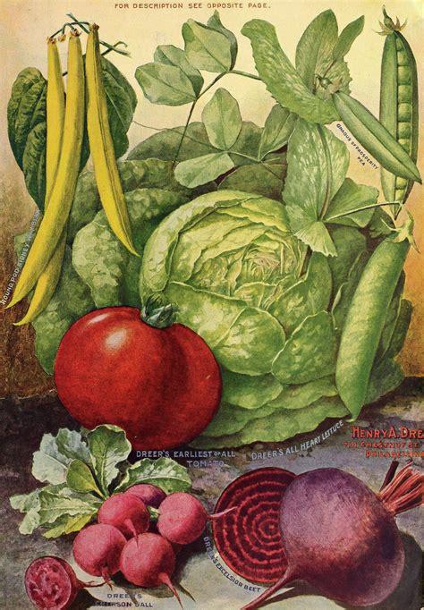 1902 Henry A Dreer Vegetable Seed Catalog Illustration Vegetable Garden Catalogs