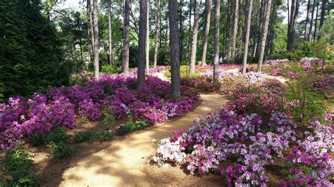 Raleigh Botanical Garden Wral Azalea Gardens 37 Photos Botanical Gardens 2619 Western Blvd Raleigh Nc United