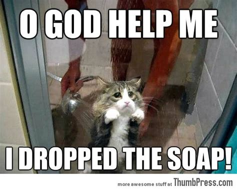 mindless mirth funny animal memes