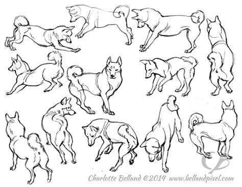 doggy gestures in urban sketching the complete guide shiba inus love snow bellandpixel