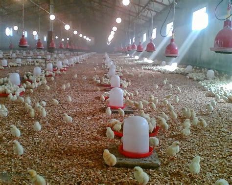 2015 nigeria poultry business plan for layers and broilers pictures of poultry pen house design layout
