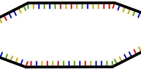 cadena de l adn ciencias de joseleg la hebra l 237 der y la hebra rezagada en