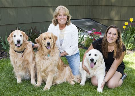 golden mist retrievers golden retriever breeders montana montana mist goldens