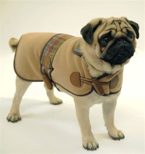 pug coat pin by brenda chandler on sew insprinational