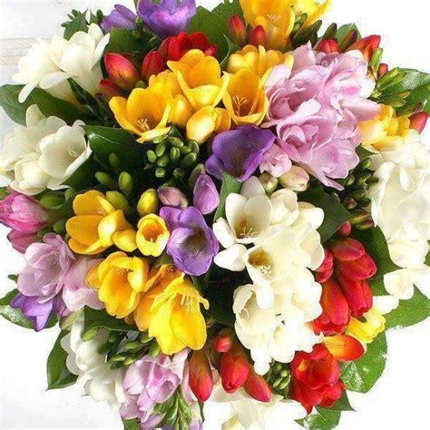 immagini di fiori di primavera giorni di primavera 171 n vigando