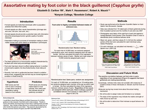 scientific poster layout exles poster exles how do i design a research poster