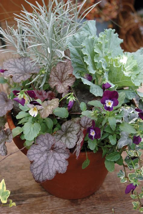 8 tips for fall and winter container gardening festive fall and winter containers state by state