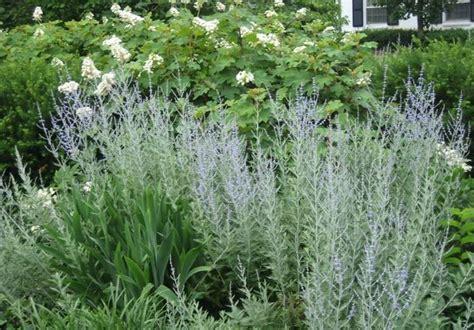 giardino semplici giardino dei semplici giardinaggio