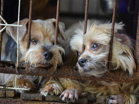 puppy mill dogs puppy mill awareness part iii