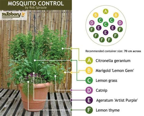 mosquito control backyard natural mosquito control for the yard gardening pinterest