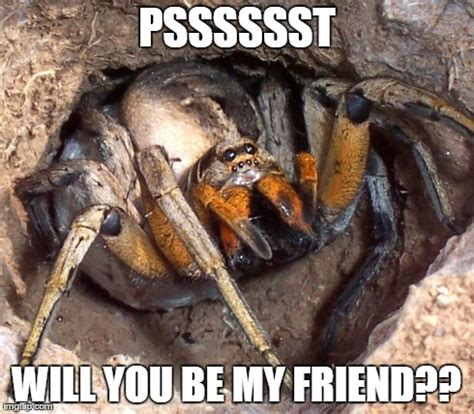 Friendly Spider Meme Picture Webfail - image tagged in friendly spider imgflip