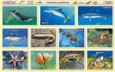 imagenes animales acuaticos y terrestres 425 animales acu 225 ticos maryland