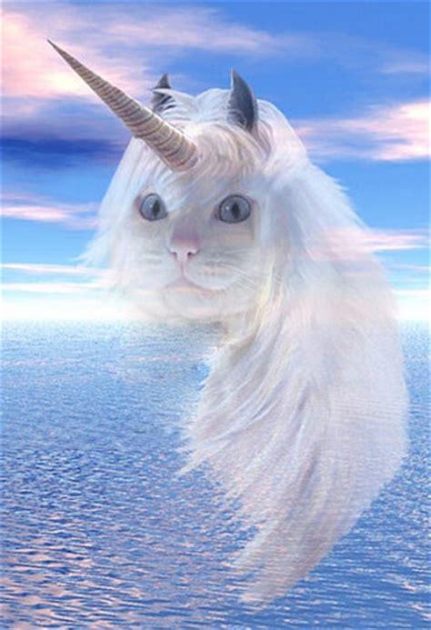 wallpaper cat unicorn super punch unicorn cat link roundup