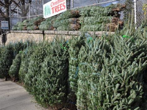 where to buy a christmas tree in queens bayside ny patch