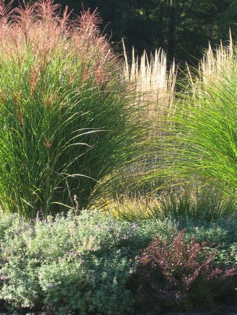 another pinner said quot for the past 3 years grasses are my favorite they add so much movement