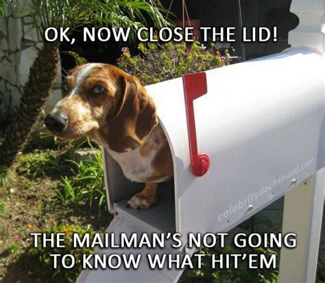 Weiner Dog Meme - dachshund birthday meme dog breeds picture
