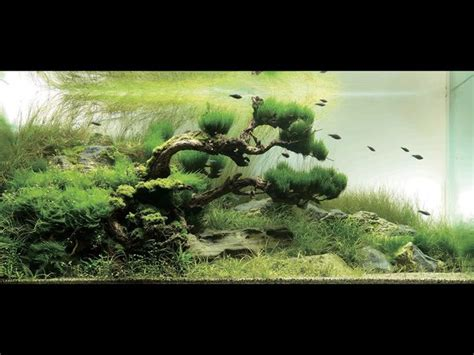 Japanese Aquascape Artist by Pin By Antoine Planchais On Iwagumi
