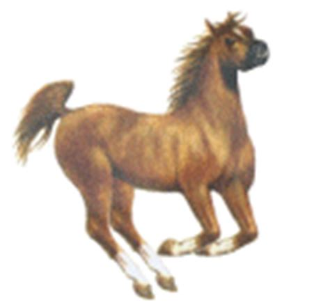 bidet gif gif chevaux et image animee gifs chevaux et bidet