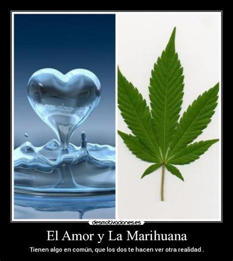 imagenes de weed con frases de amor el amor y la marihuana desmotivaciones