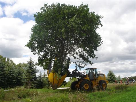 Tree Spandek digging trees and shrubs for transplanting wikis the