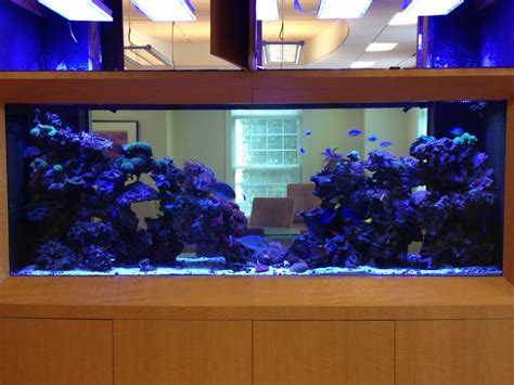 aquarium design group lighting orphek leds for better growth and color orphek