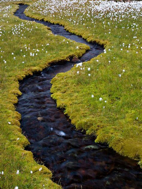 What Is A Backyard Garden Small Stream Through Cotton Grass A Narrow Stream Gently