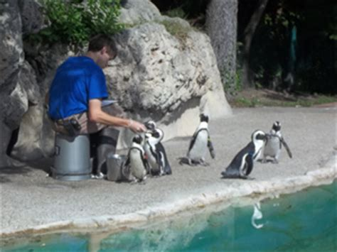 how to become a zookeeper degrees schools career info