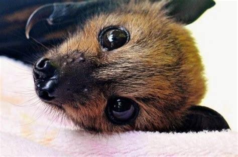 fruit bats fruit bats