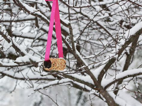 winter bird feeder craft