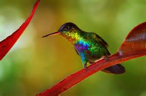 hummingbird colors colors i rainbows and hummingbirds
