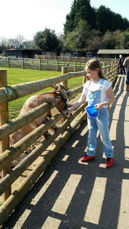 daughter feeding the goats picture of christmas tree
