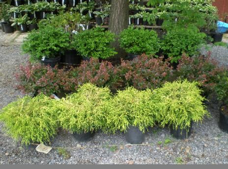 Bushes For Landscaping Shrubs Bushes