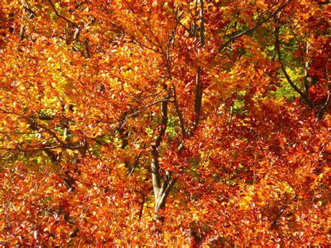 Diy Gartendeko Herbst by Gartendeko Herbst Selber Machen Diy Dekoideen