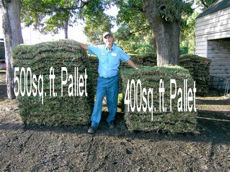 How Much Is 500 Square Feet p amp r sod pallet sod lawns replaced floratam or bahia