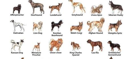 which state has the most dog owners per capita 2016 the most famous dog breeds in the united states dog