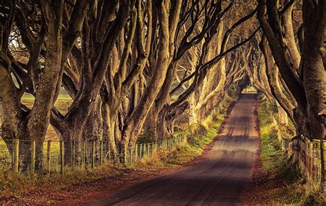 darkest hour release date ireland game of thrones dark hedges road accidentally painted