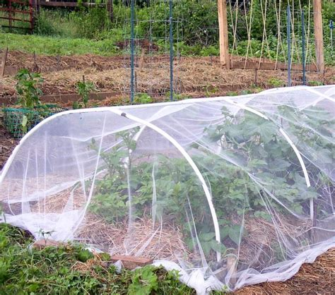 Garden Row Covers by Using Floating Row Cover And Tulle Netting In The Organic