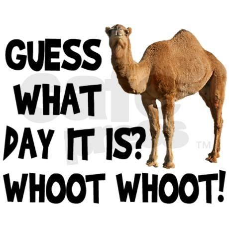 Guess Jpg1 hump day camel pictures photos and images for