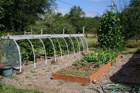 treated wood vegetable garden beds garden ftempo