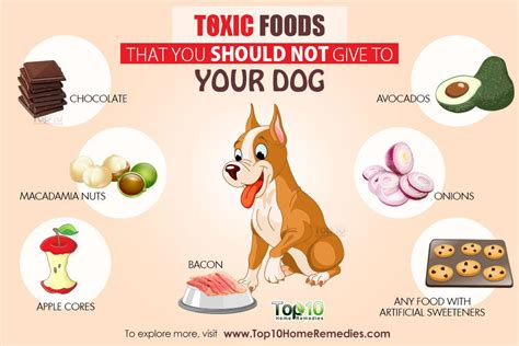 what foods are toxic to dogs 10 toxic foods that you should not give to your top 10 home remedies