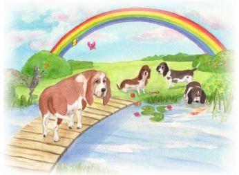 dieren begraven in je tuin je huisdier in de tuin begraven wat zijn de regels