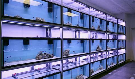 aquarium design store led solutions for aquarium stores current usa