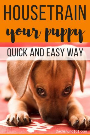 how to house a puppy fast how to house puppy house puppy the fast easy way