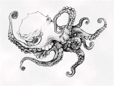 b w octopus sketch tattoo ideas pinterest