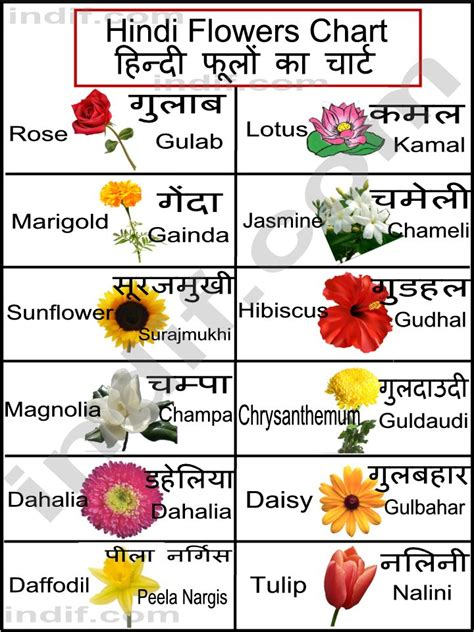 List Of Garden Flowers Common Names Flowers Chart ह न द फ ल क च र ट Basic Flowers From India