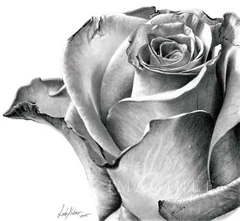 drawing in amazing pencil drawings of flowers drawing artistic